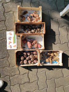 Kkartoffeln in Kiste